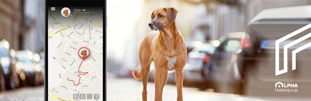 تگ یا ردیاب های هوشمند حیوانات خانگی